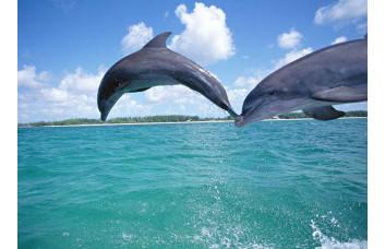 Фотообои Дельфины