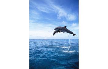 Фотообои Дельфины 001