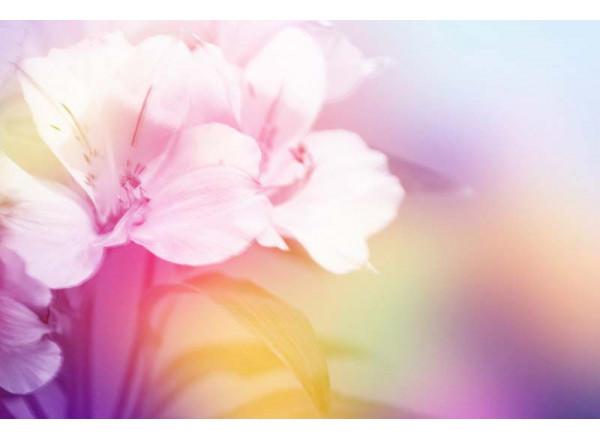Фотообои Цветы 003