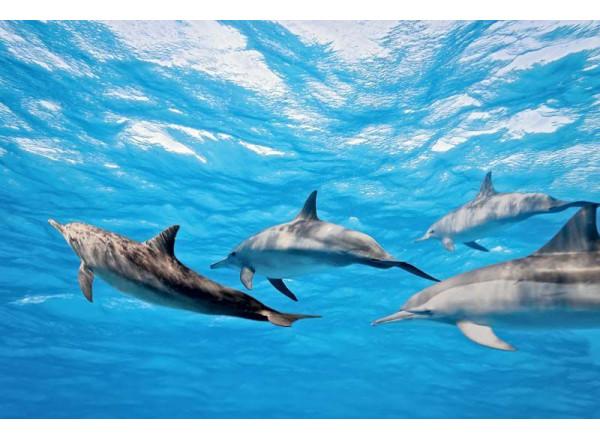 Фотообои Дельфины 003