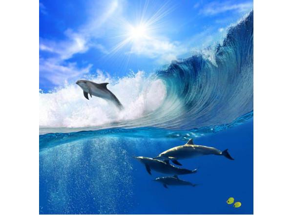 Фотообои Дельфины 004