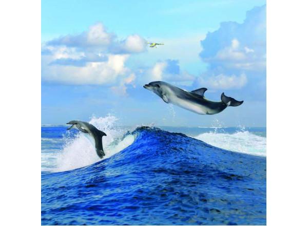 Фотообои Дельфины 005