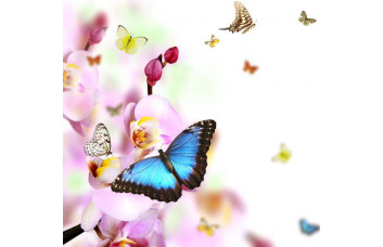 Фотообои Бабочки в полете