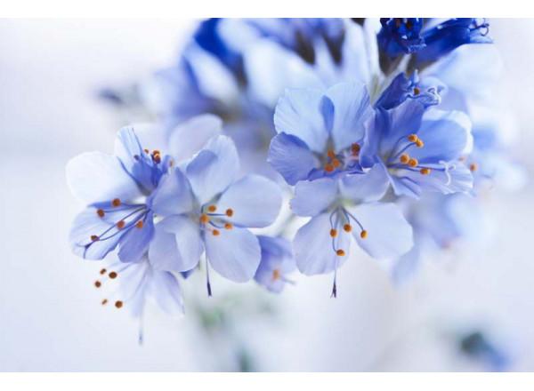 Фотообои Цветы 006